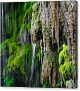 Gormon Falls Colorado Bend State Park.  Canvas Print