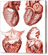 Heart, Anatomical Illustration, 1814 Canvas Print