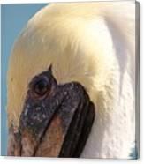 Pelican Up Close Canvas Print