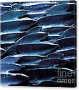 Shark Skin, Sem Canvas Print