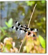 12 Spotted Skimmer Dragonfly 2 Canvas Print