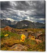 12000 Foot Flower Canvas Print