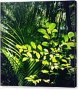 Jungle 123 Canvas Print