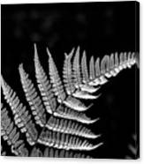 Fern Close-up  Canvas Print