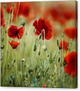Summer Poppy Meadow Canvas Print