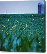 1306 - Fireflies - Lightning Bugs Over Corn Canvas Print