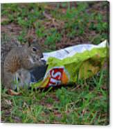 14- Chip Lovin' Squirrel Canvas Print