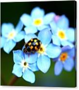 14 Spot Ladybird Canvas Print