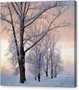 Amazing Landscape With Frozen Snow Covered Trees At Sunrise   Canvas Print