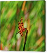 15- Dragonfly Canvas Print