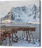 Reine, Lofoten - Norway Canvas Print
