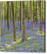 150403p366 Canvas Print