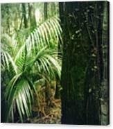 Jungle 72 Canvas Print