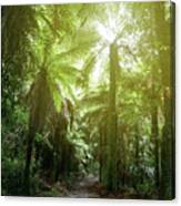 Forest Trail 2 Canvas Print