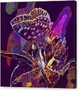 Insect Nature Live  Canvas Print