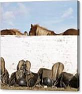 162669 Horse Walls Animals National Geographic Canvas Print