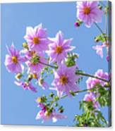 Fully Bloomed Pink Dahlia Imperialis At Garden In November Canvas Print