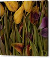 Tulips Wilting Canvas Print