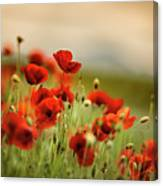 Summer Poppy Meadow Canvas Print