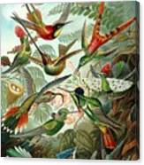 1899 Hummingbird Species Art Forms Of Nature Print Canvas Print