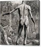 18th Century Anatomical Engraving Canvas Print