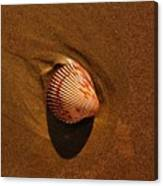 Beach Shell Canvas Print