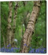 Shallow Depth Of Field Landscape Of Vibrant Bluebell Woods In Sp Canvas Print