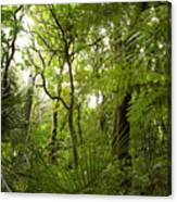 Jungle 1 Canvas Print