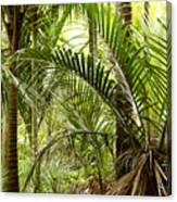 Jungle 94 Canvas Print