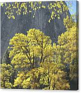 1m6610 Middle Cathedral Rock In Autumn Canvas Print