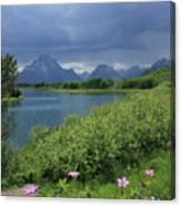 1m9236 Mt. Moran And Sticky Geranium Canvas Print
