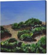 Napa Hills Canvas Print