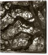 Angel Oak Live Oak Tree Canvas Print