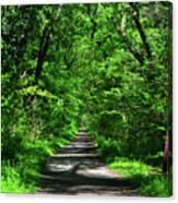 Appalachian Trail In Maryland Canvas Print