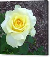 Australia - Yellow Rose Flower Canvas Print
