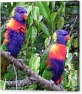 Australia - Two Brightly Coloured Lorikeets Canvas Print