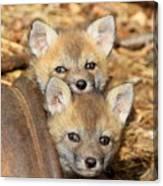 Baby Fox Kits Canvas Print