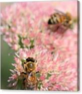 2 Bees Canvas Print