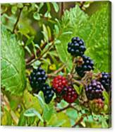 Berries In Vicente Perez Rosales National Park Near Puerto Montt-chile  Canvas Print