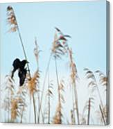 Black Bird In Cat Tails Canvas Print