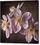 Blackberry Flowers Canvas Print