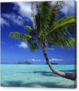 Bora Bora, Palm Tree Canvas Print