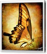 Broad Banded Swallowtail Canvas Print