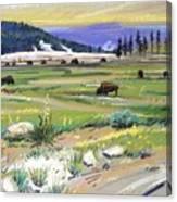 Buffaloes In Yellowstone Canvas Print