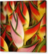 Bunch Of Heliconia Canvas Print
