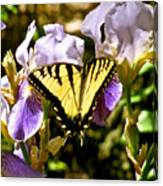 Butterfly Collection Design Canvas Print