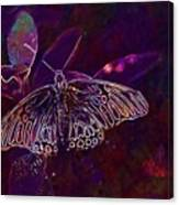Butterfly Insect Wing Wildlife Bug  Canvas Print