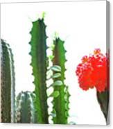 Cactus Plants Canvas Print