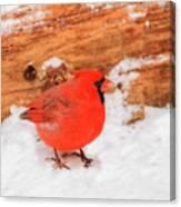 #2 Cardinal In Snow Canvas Print