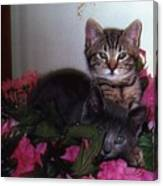 2 Cats In The Flowers Canvas Print